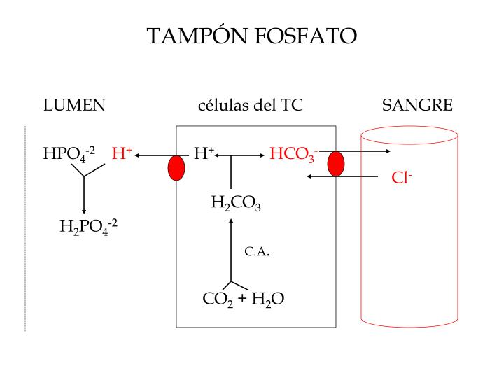 TAMPÓN FOSFATO
