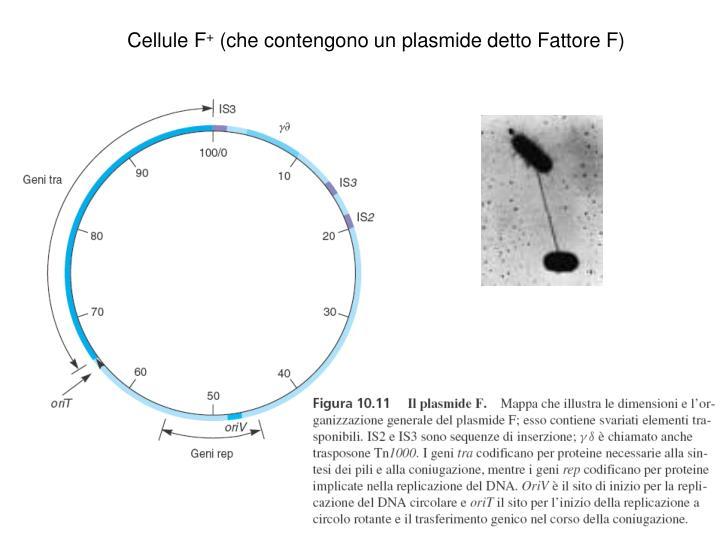 Cellule F