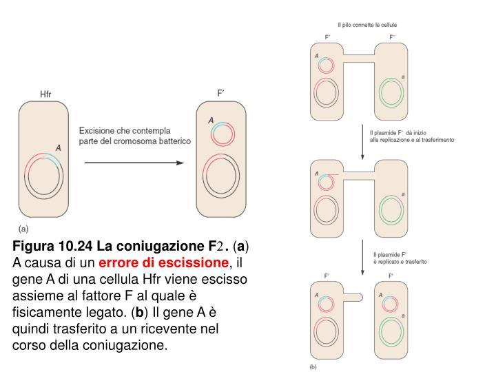 Figura 10.24