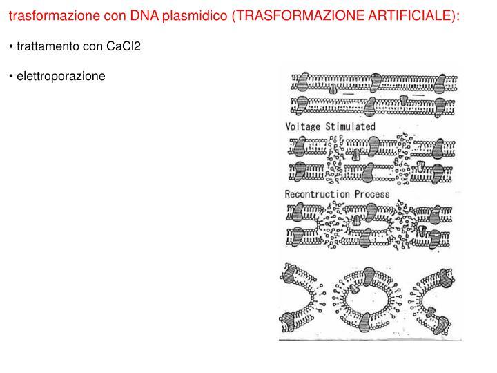 trasformazione con DNA plasmidico (TRASFORMAZIONE ARTIFICIALE):