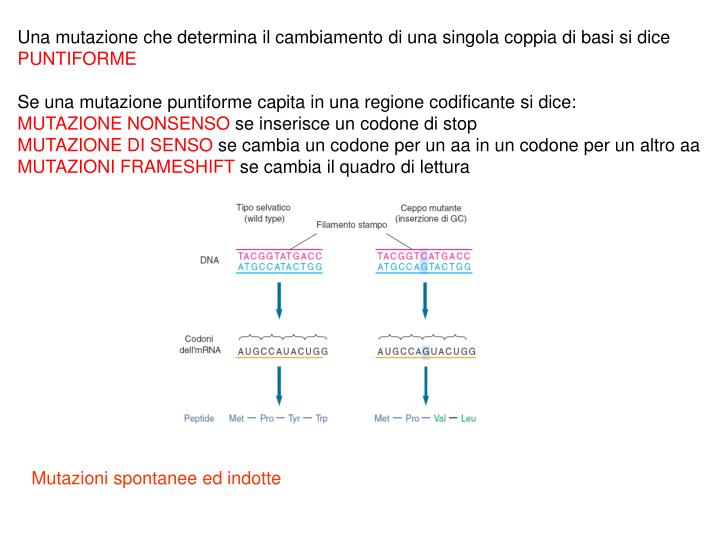 Una mutazione che determina il cambiamento di una singola coppia di basi si dice
