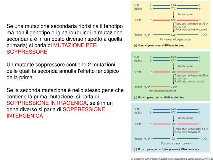 Se una mutazione secondaria ripristina il fenotipo ma non il genotipo originario (quindi la mutazione secondaria è in un posto diverso rispetto a quella primaria) si parla di