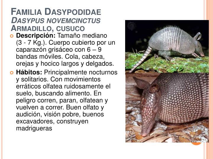 Familia Dasypodidae