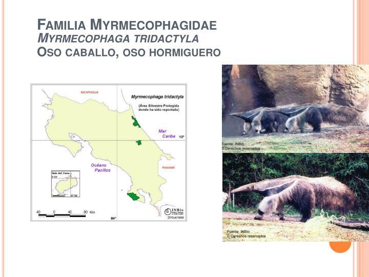 Familia Myrmecophagidae