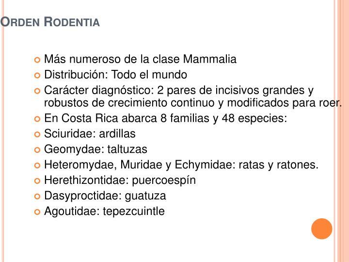 Orden Rodentia