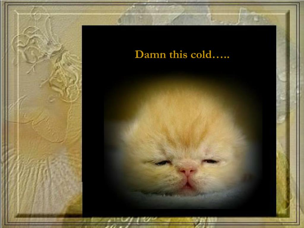 Damn this cold…..