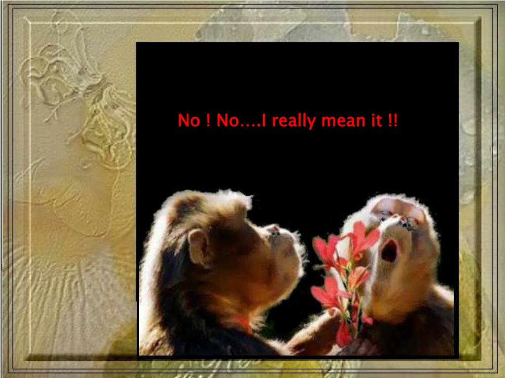 No ! No….I really mean it !!
