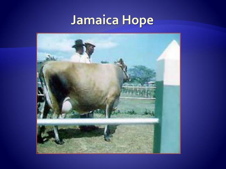 Jamaica Hope
