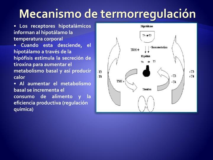Mecanismo de termorregulación