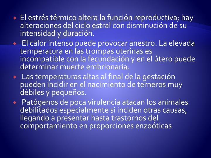 El estrés térmico altera la función reproductiva; hay alteraciones del ciclo