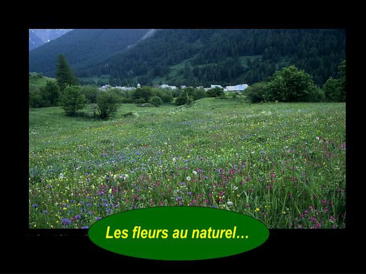Les fleurs au naturel…