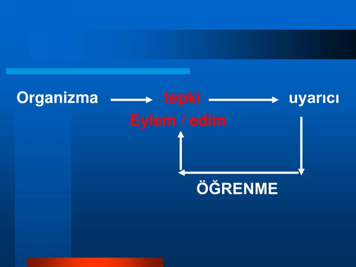 Organizma