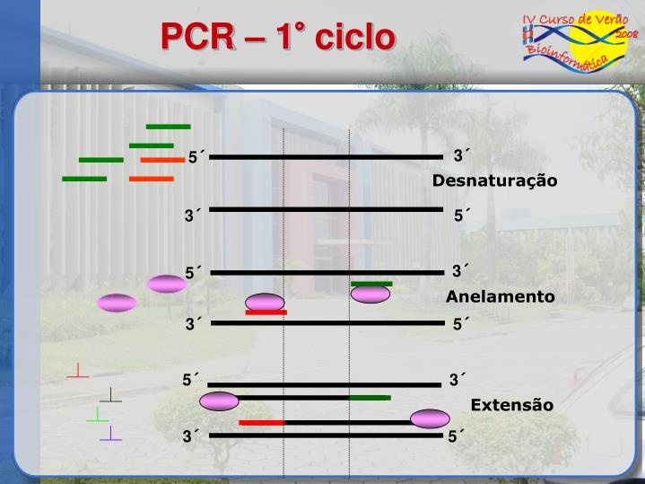 PCR – 1° ciclo