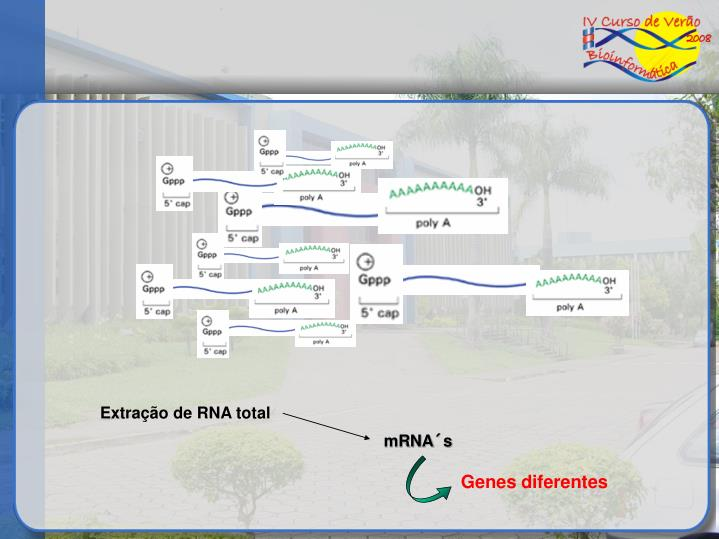 Genes diferentes