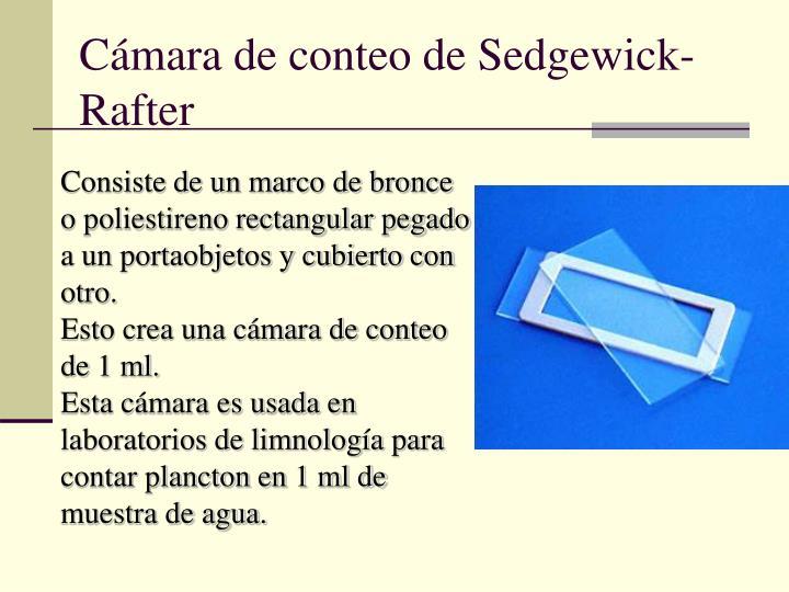 Cámara de conteo de Sedgewick-Rafter
