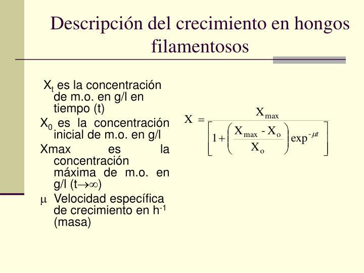 Descripción del crecimiento en hongos filamentosos