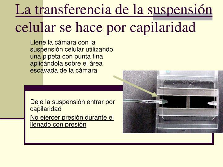 La transferencia de la suspensión celular se hace por capilaridad