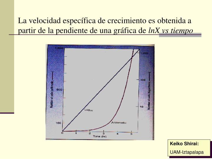 La velocidad específica de crecimiento es obtenida a partir de la pendiente de una gráfica de