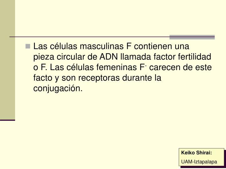 Las células masculinas F contienen una pieza circular de ADN llamada factor fertilidad o F. Las células femeninas F