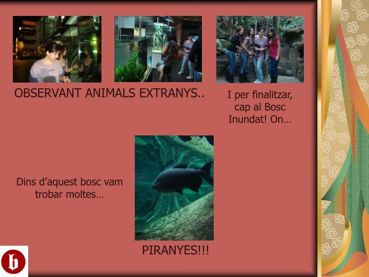 OBSERVANT ANIMALS EXTRANYS..