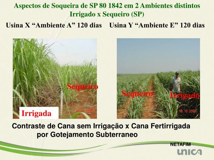 Aspectos de Soqueira de SP 80 1842 em 2 Ambientes distintos Irrigado x Sequeiro (SP)