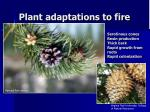 plant adaptations to fire