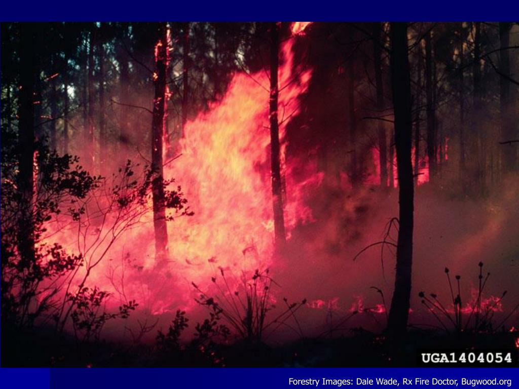 Forestry Images: Dale Wade, Rx Fire Doctor, Bugwood.org