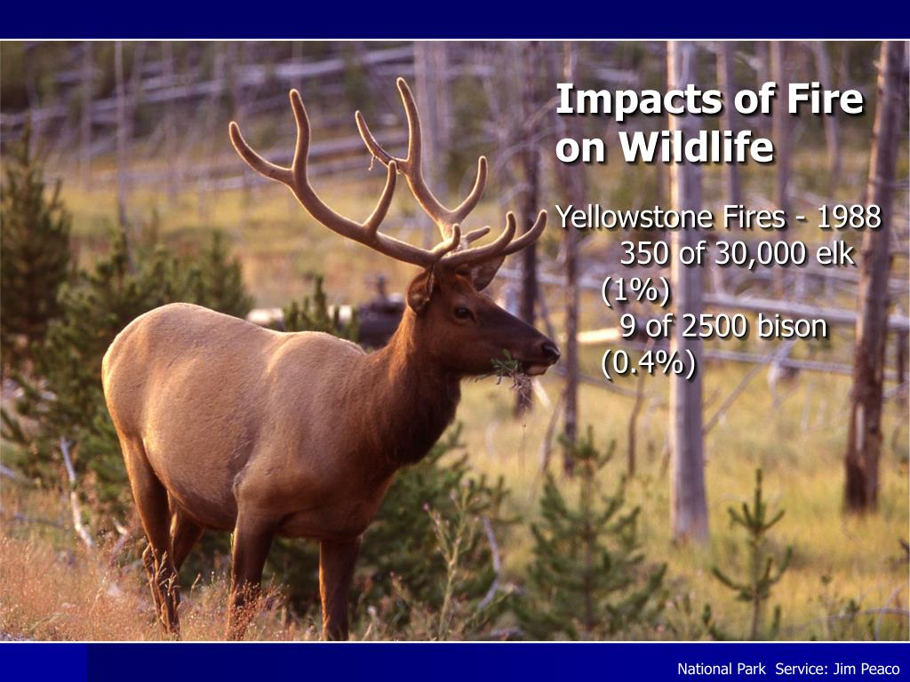 Impacts of Fire on Wildlife
