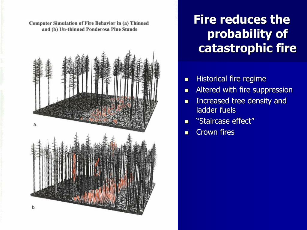 Fire reduces the probability of catastrophic fire