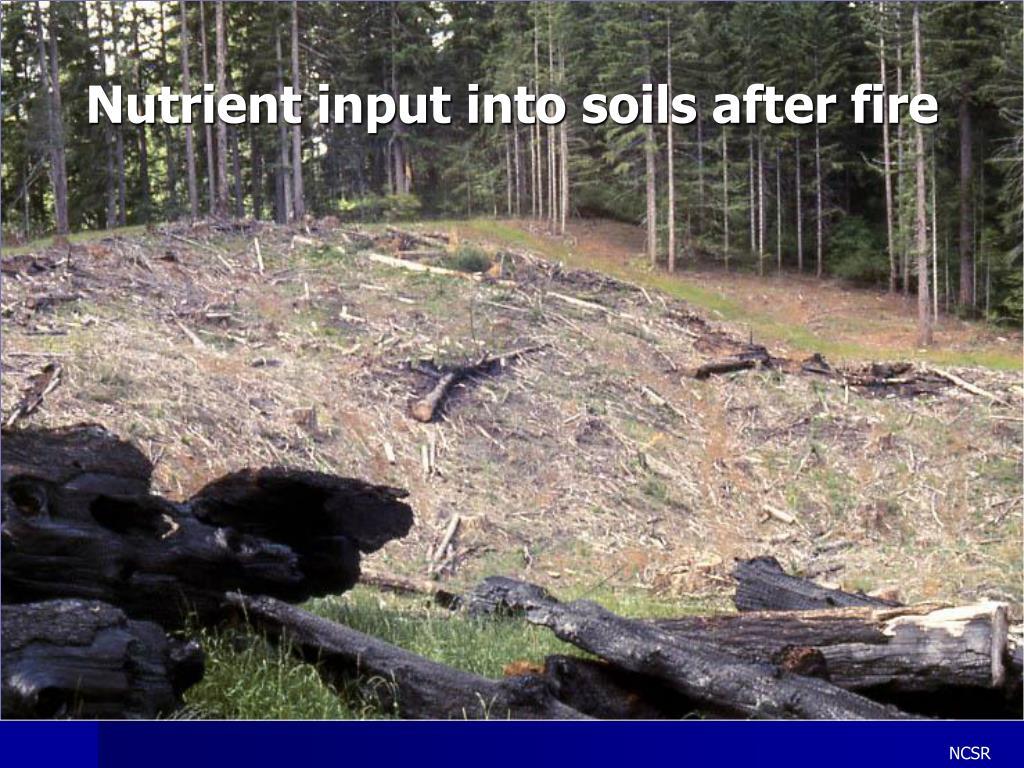 Nutrient input into soils after fire
