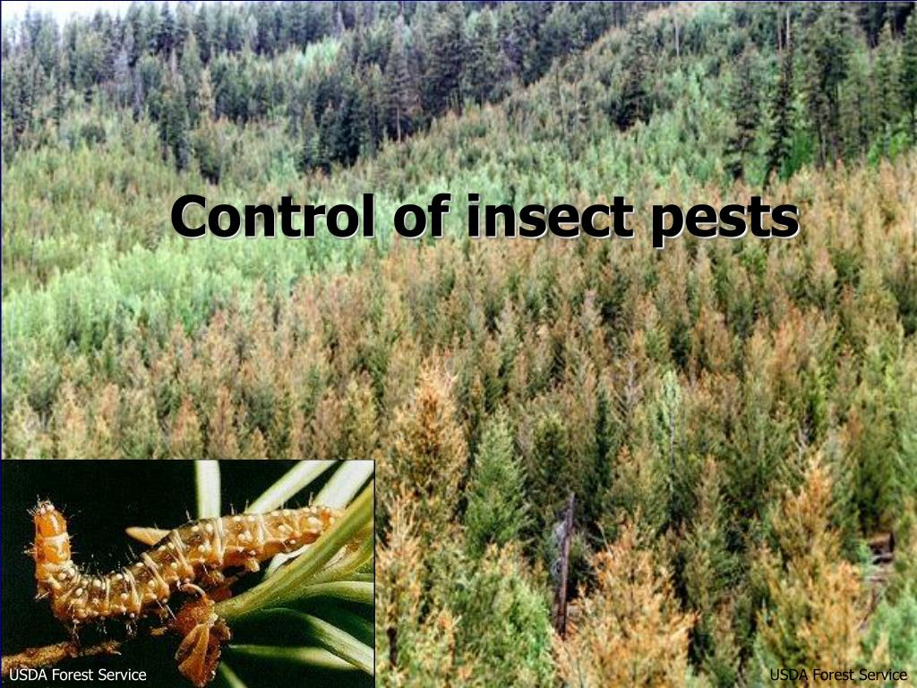 Control of insect pests