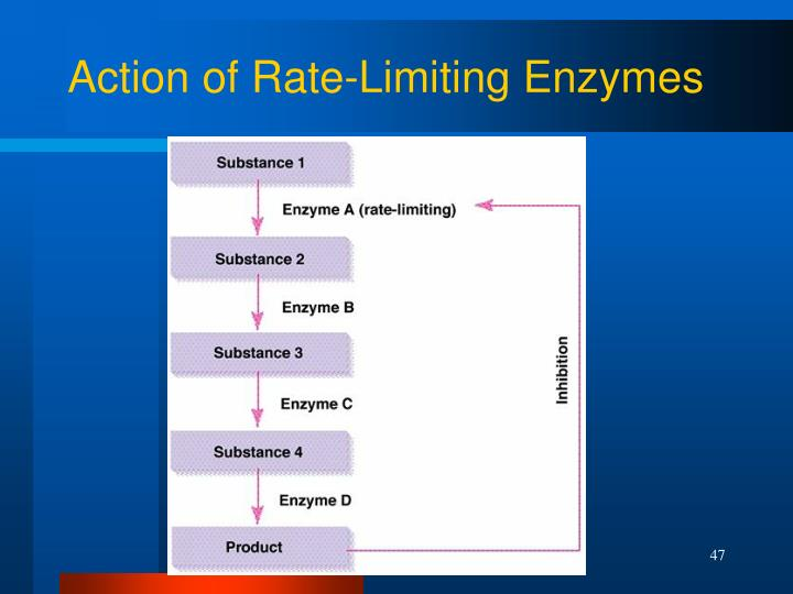 Action of Rate-Limiting Enzymes