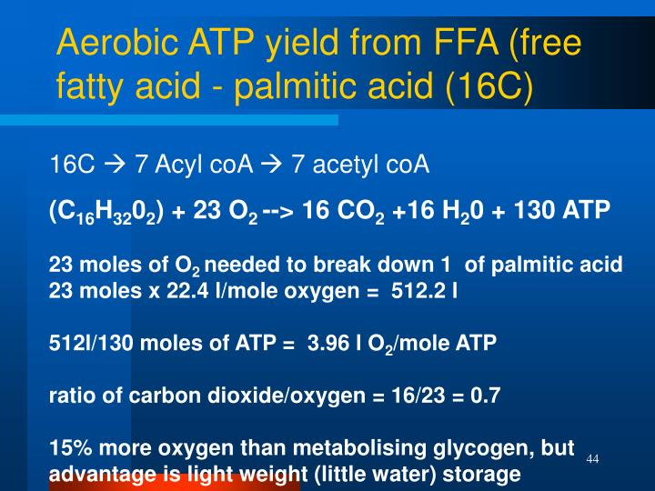 Aerobic ATP yield from FFA (free fatty acid - palmitic acid (16C)