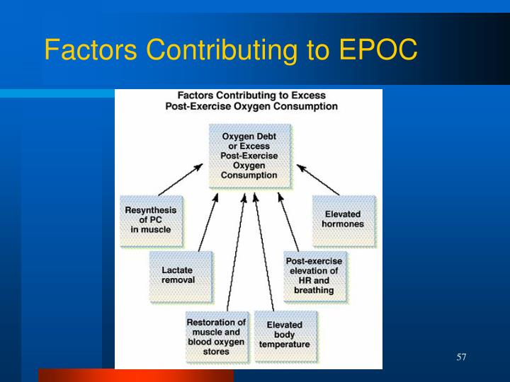 Factors Contributing to EPOC