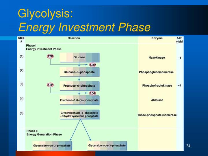 Glycolysis: