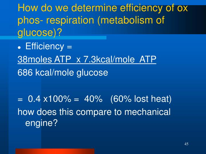 How do we determine efficiency of ox phos- respiration (metabolism of glucose)?