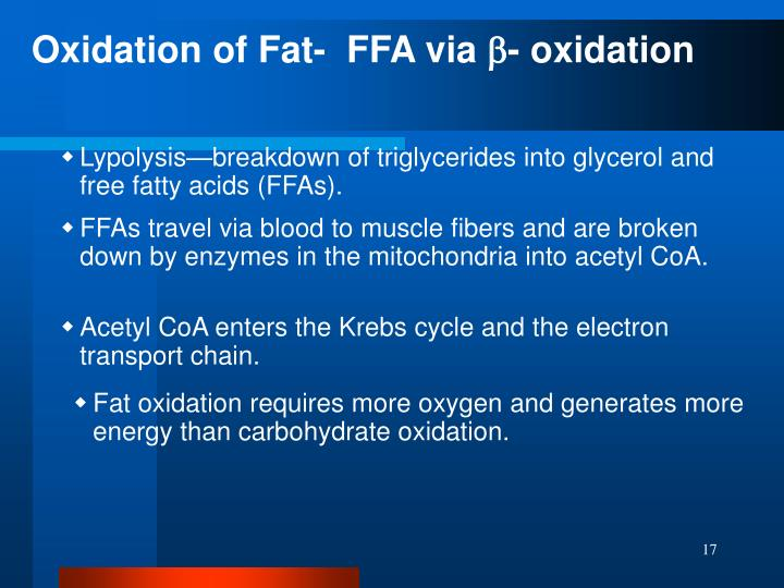 Oxidation of Fat-  FFA via