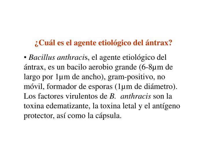 ¿Cuál es el agente etiológico del ántrax?