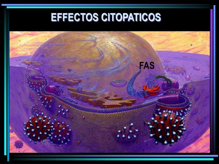 EFFECTOS CITOPATICOS