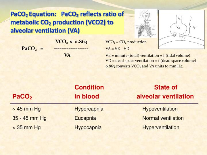 Paco 2 equation paco 2 reflects ratio of metabolic co 2 production vco2 to alveolar ventilation va