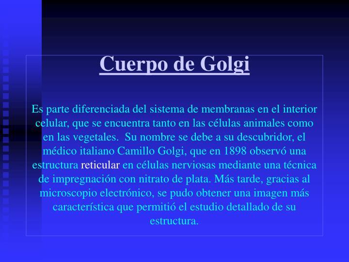 Cuerpo de Golgi