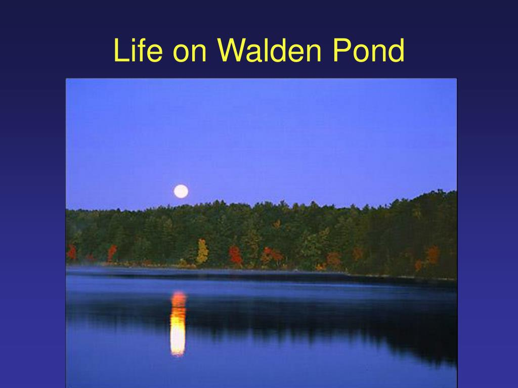 Life on Walden Pond