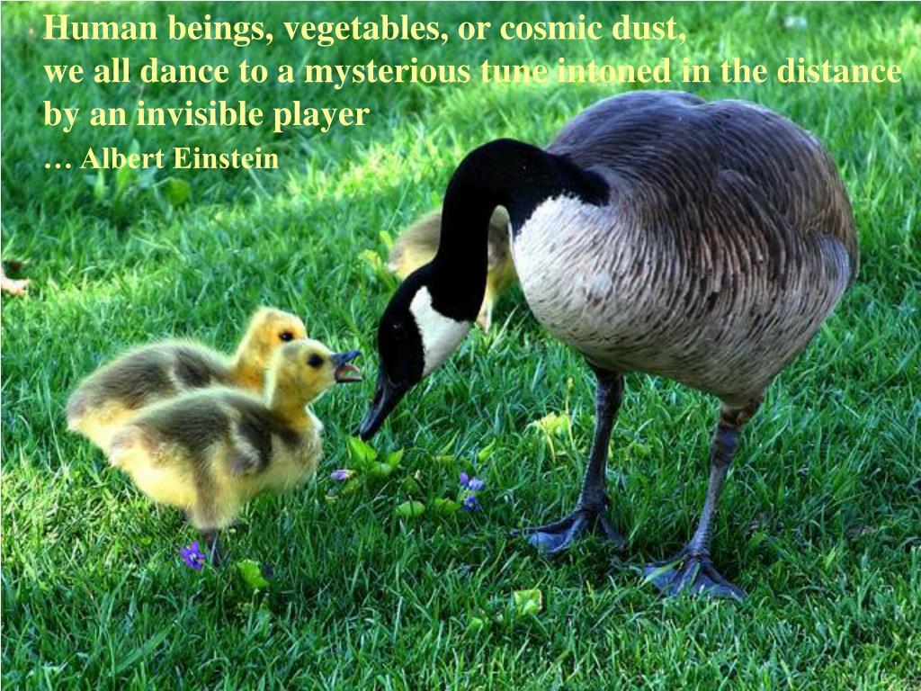 Human beings, vegetables, or cosmic dust,