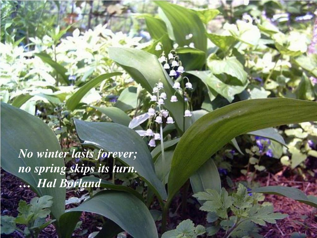 No winter lasts forever;