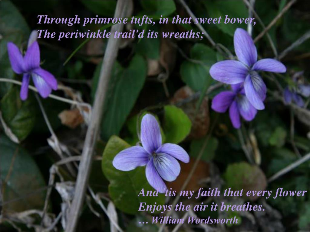 Through primrose tufts, in that sweet bower,