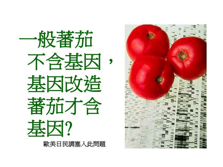 一般蕃茄不含基因,基因改造蕃茄才含基因