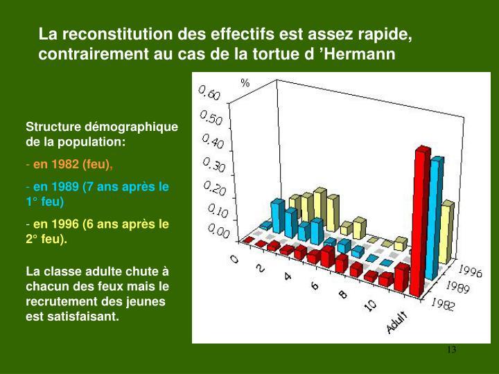 La reconstitution des effectifs est assez rapide, contrairement au cas de la tortue d'Hermann