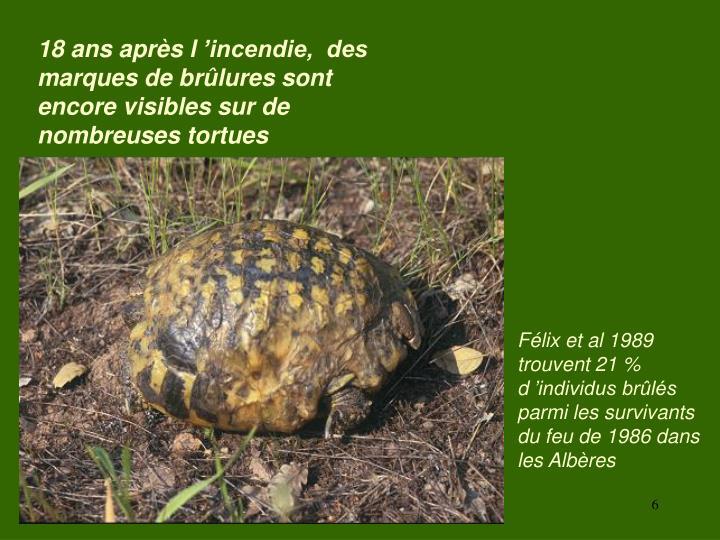 18 ans après l'incendie,  des marques de brûlures sont encore visibles sur de nombreuses tortues