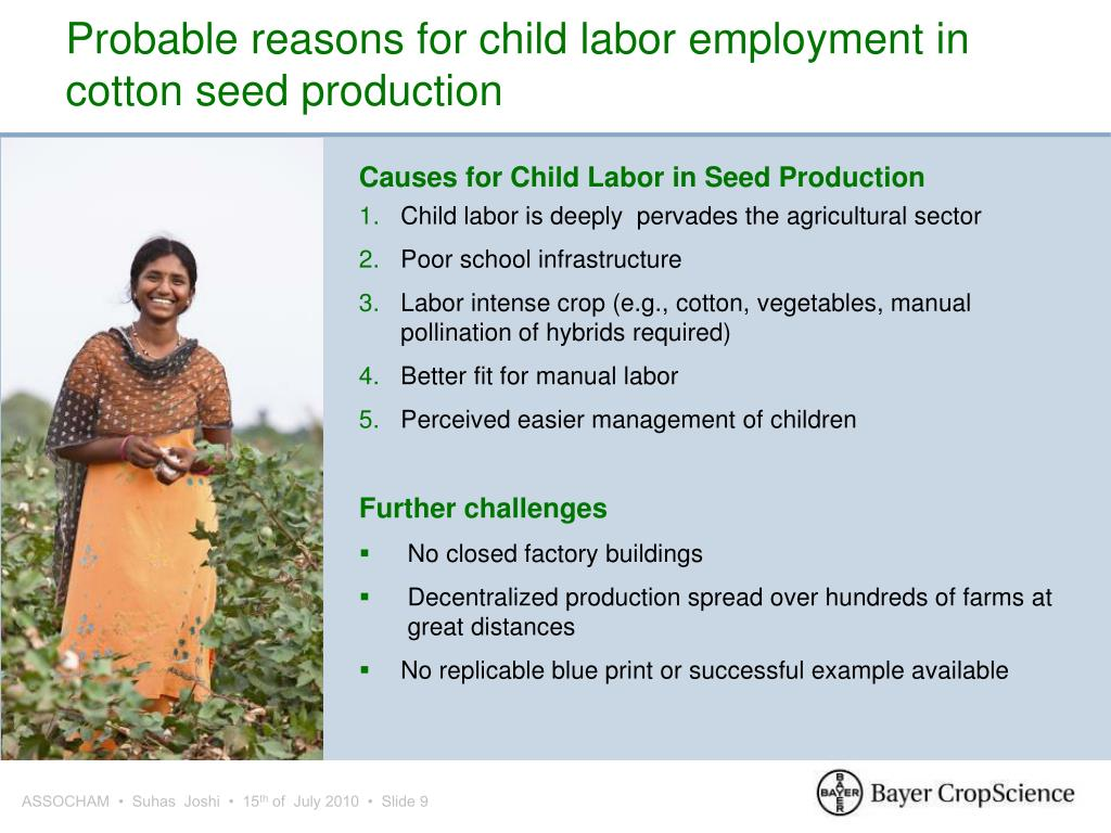 Probable reasons for child labor employment in cotton seed production