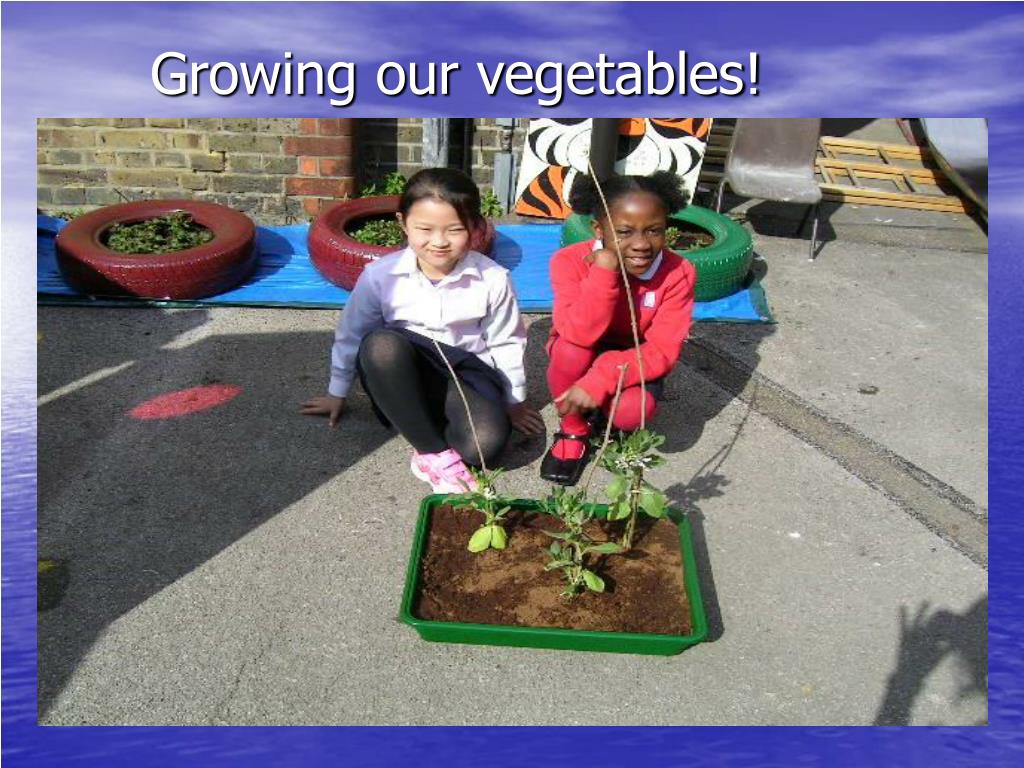 Growing our vegetables!